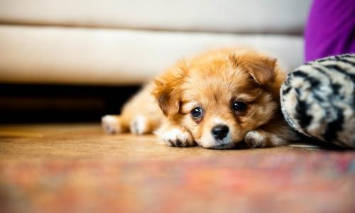 Puppy Photography 1080p Wallpapers 1