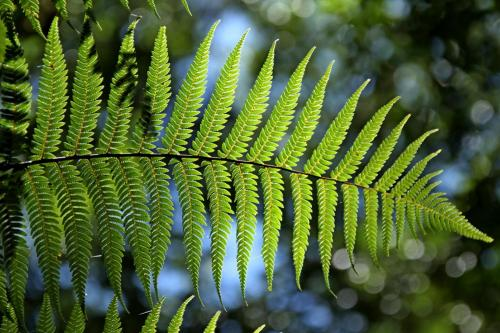 green-fern-leaf-natural