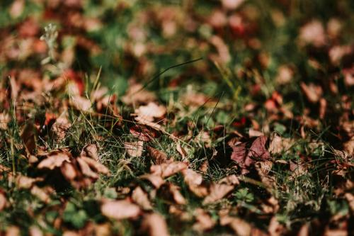 kaboompics_Autumn leaves on the ground