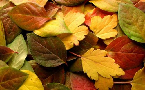 leaf-autumn-hd-wide-wallpaper-seasons-images-autumn-wallpaper